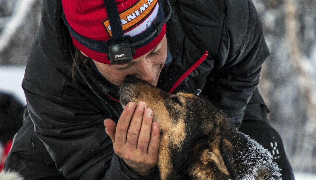 Marit Beate Kasin og lederhunden hennes Gøy har et helt spesielt forhold. Gøy skulle egentlig pensjoneres etter forrige Finnmarksløp, men er med i år likevel. Foto: André Bendixen