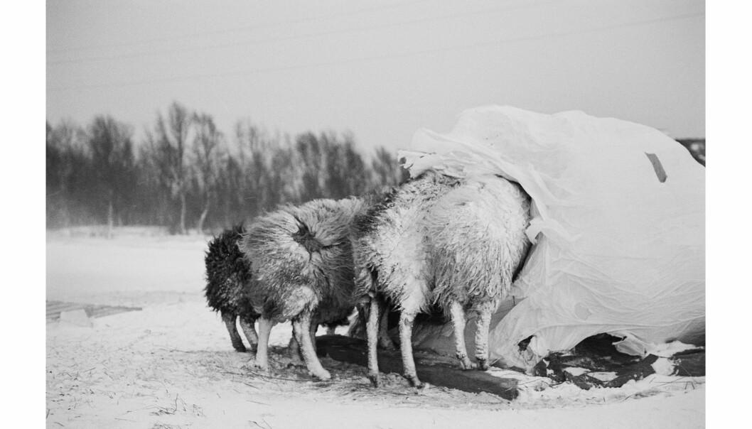 Fra boka «Tussøy». Foto: Ingun Alette Mæhlum