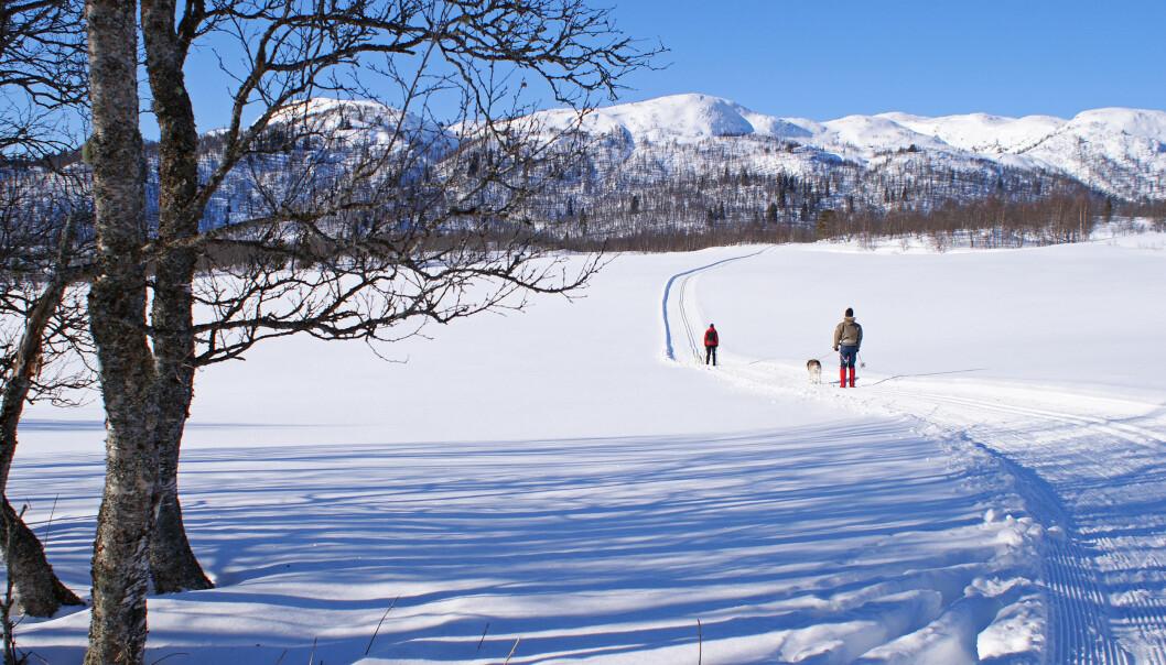 Å kunna gå på ski på blanke føremiddagen, er berre som bonus å rekne, skriv Heidi Hjorteland Wigestrand. Illustrasjonsfoto: Randi Hausken/Flickr.com
