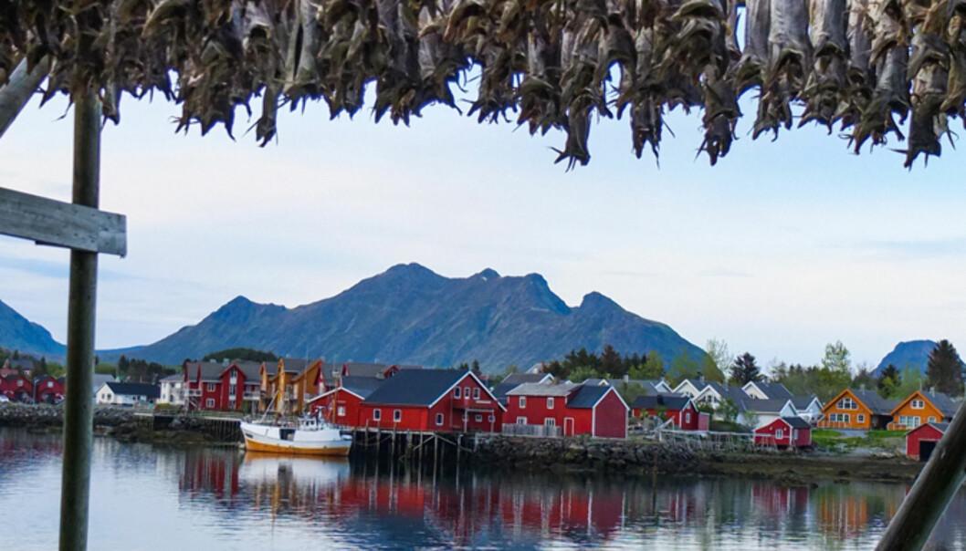 Tørrfisk i Ballstad. Foto: Kathrine Geard