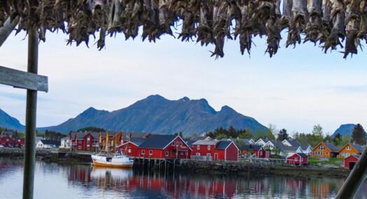 Det er ikke en million turister som sliter på Lofoten