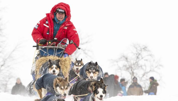 – Alle hundekjørere snakker om energien som de og spannet har sammen. I dette bildet er det veldig synlig: svensken Petter Karlsson og hundene hans har helt likt uttrykk i ansiktet, sier Bendixen. Karlsson ledet Finnmarksløpet en god stund.Foto: André Bendixen