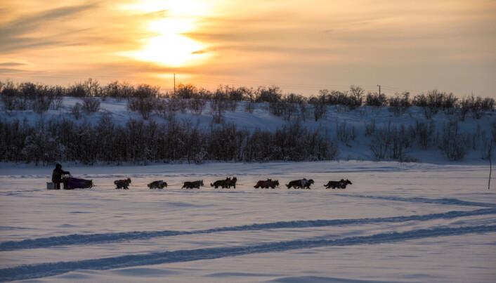 Finnmarksløpet byr på mange naturopplevelser. Å kjøre i solnedgang alene på elva er en av de.Foto: André Bendixen