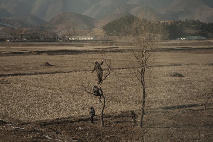 Tre guttunger venter spent. Hva venter de på? At kvinnen i treet skal hente ned en frukt? Eller leter hun etter et godt pilemne? Å rapportere fra Nord-Korea er som et puslespill. Spør man guidene, får man gjerne beskjed om å slette bildene.Foto:Annemor Larsen