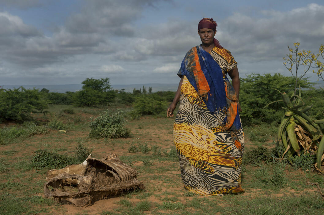 Den grønne tørken. Zeynab Dayib mistet mange dyr i tørken i 2016 i landsbyen Gerbile, i Fafan zone i Somali region, Etiopia. Foto:Håvard Bjelland, Kirkens Nødhjelp