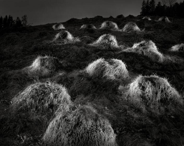 Foto: Rune Sævig, Bergens Tidende