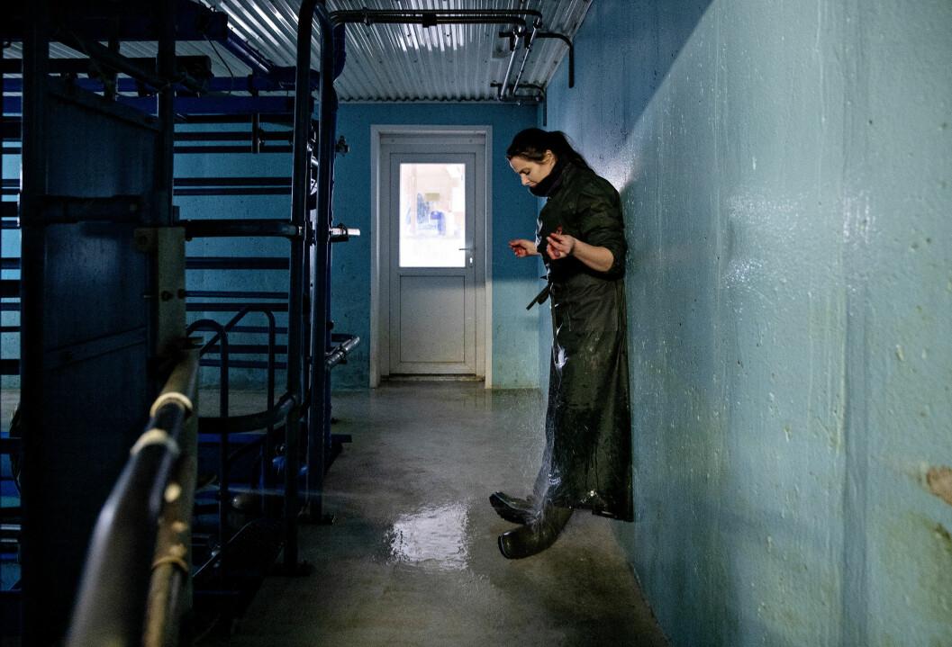 Tor Høvik fulgte en veterinær på jobb, med ny inspirasjon fra veilederne. Foto: Tor Høvik