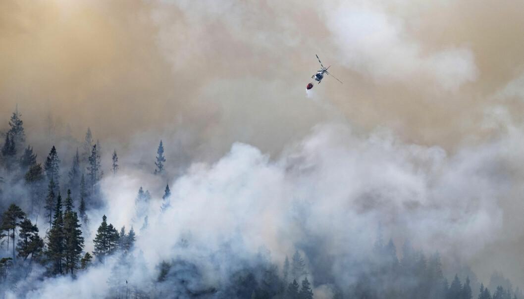 I 2018 ble det satt flere varmerekorder, men tørke og skogbranner førte til at de høye sommertemperaturene i all hovedsak utløste bekymring blant norske avislesere. Foto: Tor Erik Schrøder / NTB scanpix.