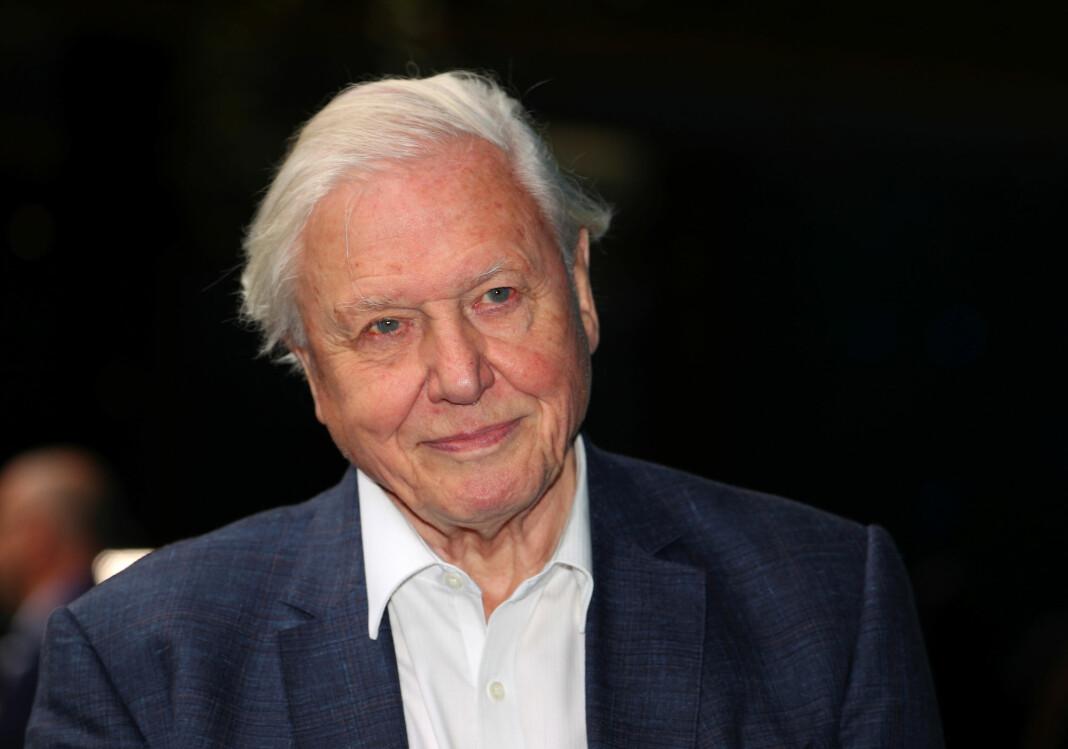 Serien «Our Planet», hvor Sir David Attenborough har fortellerstemmen, kommer til å kunne strømmes på Netflix senere i år. Foto: Reuters / NTB scanpix
