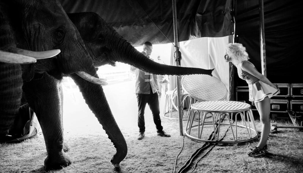 Årets Kulturbilde: Linda Kastrup, Berlingske. For bildeserien «De sidste elefanter» av elefanter på sirkus.