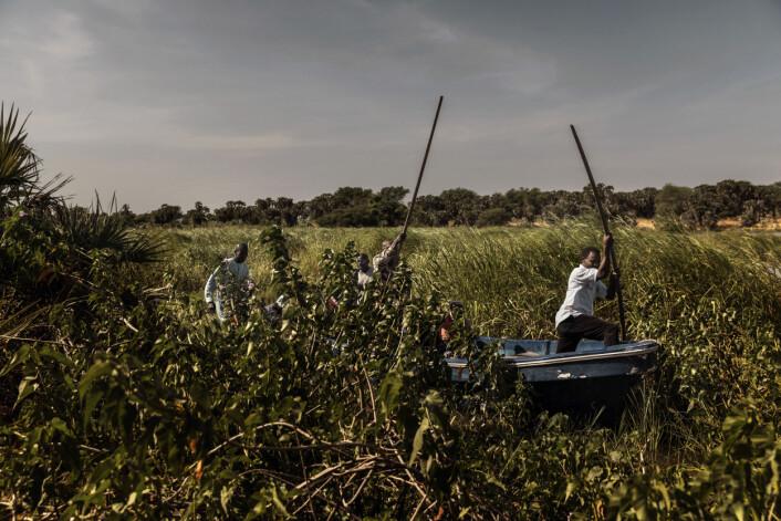 Menn staker en båt gjennom myra på kanten av Chad-sjøen, i Chad-bassenget. Foto: Marco Gualazzini / Contrasto