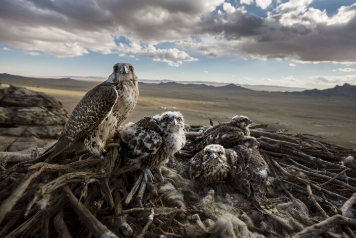 Foto: Brent Stirton / Getty Images for National Geographic