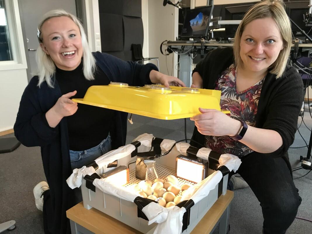 Anniken Pedersen (t.v.) og Wibeke Bruland i NRK Finnmark følger nøye med på de 32 klekkeklare eggene. Det gjør mange seere også, via Facebook. Foto: NRK