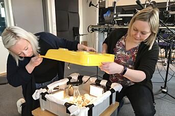 NRK Finnmarks «Påskeegg minutt for minutt» tar helt av – 43.000 har gjettet på hvilket egg som klekkes først