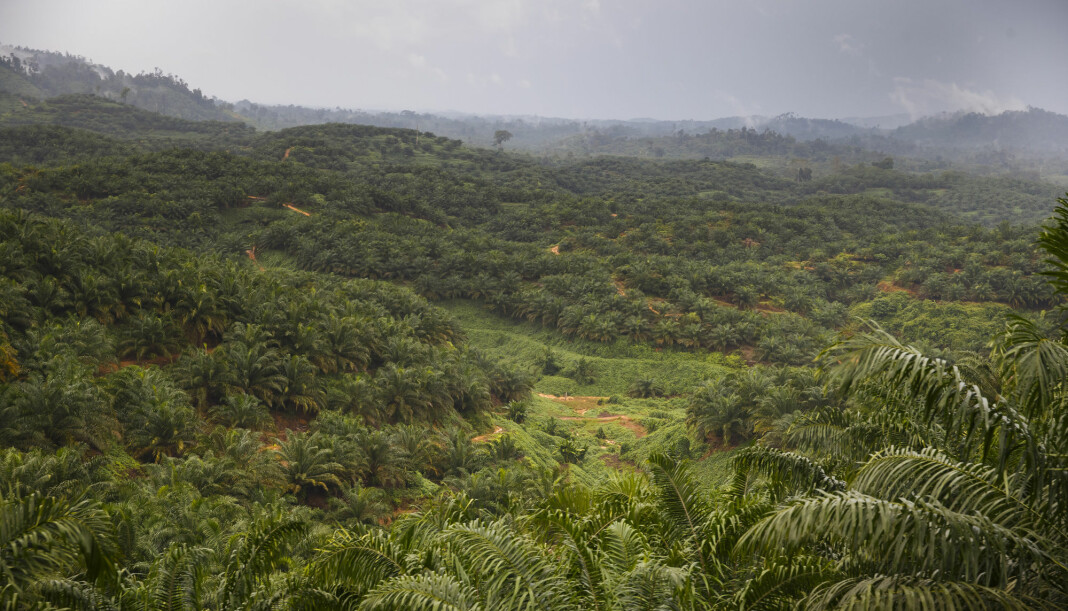 Et skogsområde i Indonesia, hvor minst én miljøjournalist er drept i løpet av det siste tiåret. Foto: Heiko Junge / NTB scanpix