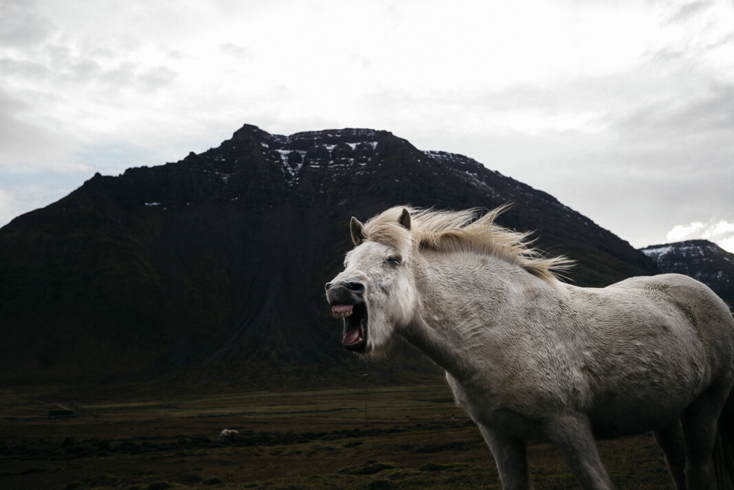 Tommy Ellingsens dokumentarprosjekt fra Island handler om unge islenderes drømmer og mål etter at det økonomiske systemet kollapset. Foto: Tommy Ellingsen