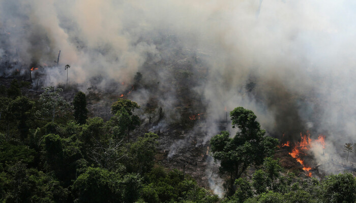 Kjendiser deler og liker gamle bilder av Amazonas-branner