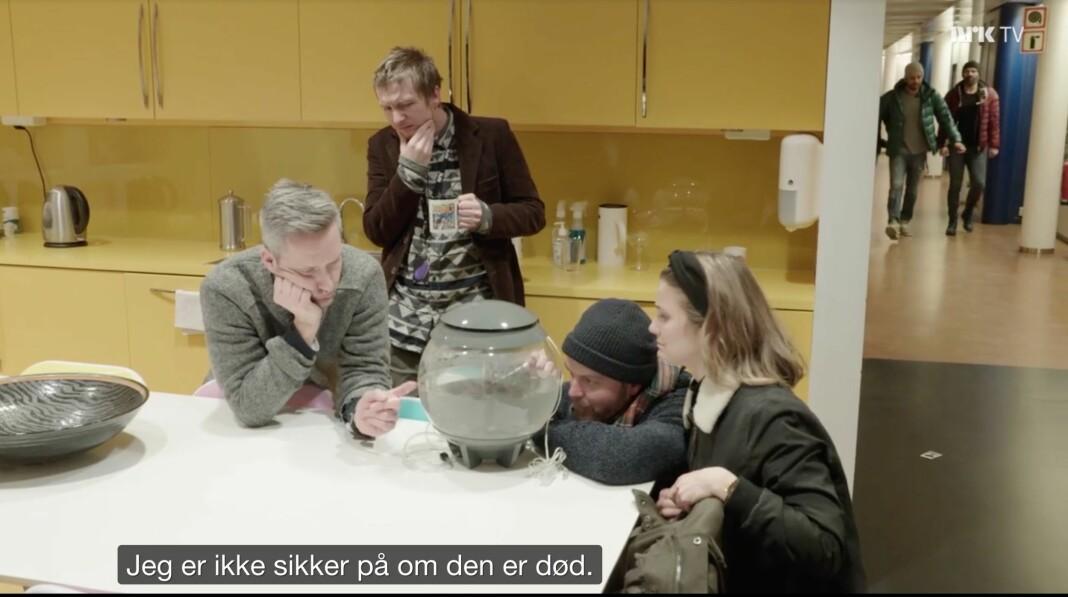 Det gikk ikke så bra med de to fiskene som fikk gift i bollen. Skjermdump NRK TV