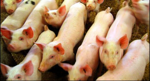Tre grisebønder siktet av Økokrim etter Brennpunkt-dokumentar