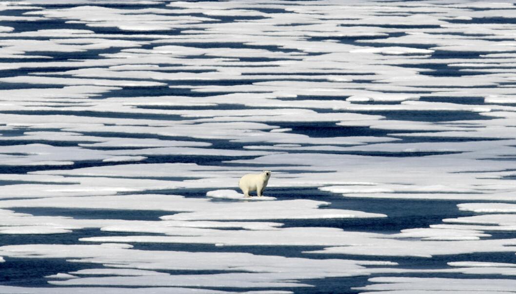 Tenk visuelt, og dropp isbjørnbildene, er ett av tipsene fra NRKs Astrid Rommetveit. – Finn bilder som bringer tematikken nærmere, som viser det som faktisk skjer der folk bor. Foto: David Goldman / AP / NTB scanpix