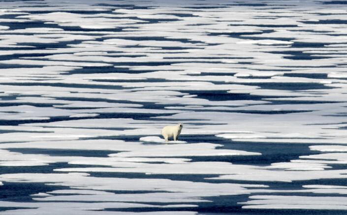En isbjørn var før et opplagt bildevalg til The Guardians klimasaker, men det er for fjernt og abstrakt, skriver avisas bilderedaktør. Foto: David Goldman / AP / NTB scanpix