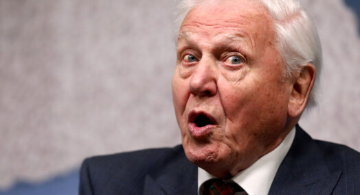 Faktisk.no: Nei, David Attenborough har ikke kalt norsk vindkraft «galskap» eller «en skandale»