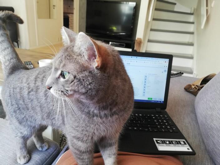 «Ikke så lett å jobbe når katten vil ligge i fanget», skriver Birthe Steen Hansen i Bergensavisa.
