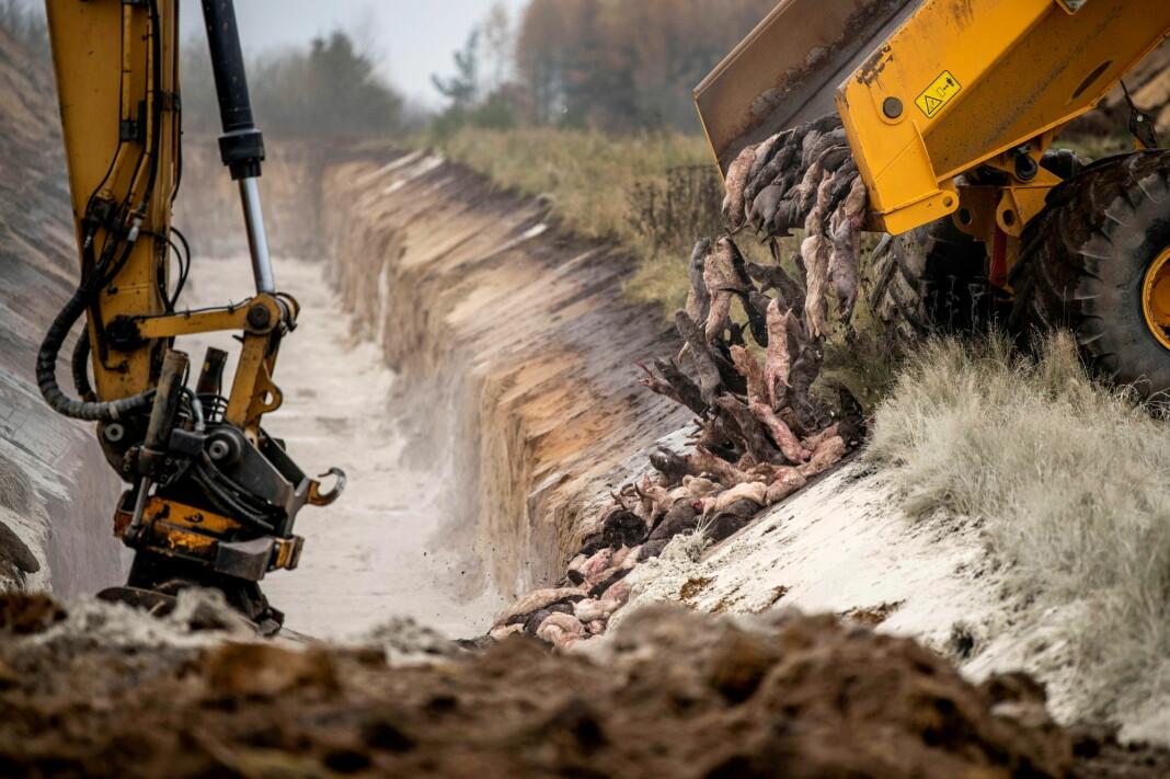 Bildet av død mink er blitt publisert i en rekke internasjonale medier.