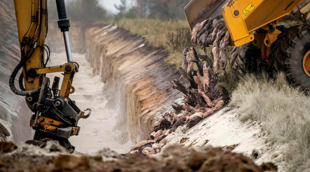 Han tok bildene av minkmassegravene som går verden rundt