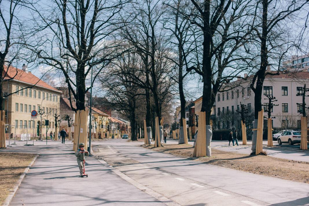 Trærne er pakket inn for å verne mot anleggsmaskiner i Gyldenløves gate. De skal ikke rives.