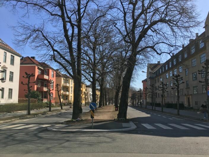 Sykkelfelt eller ikke. Konflikten i Gyldenløves gate har fått mye medieoppmerksomhet.