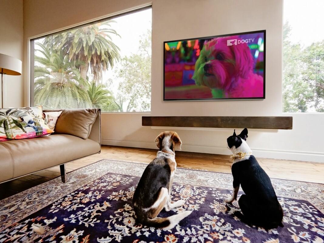 DOGTV skal kunne bidra til avslapning og stimulering for hunder som er alene hjemme.