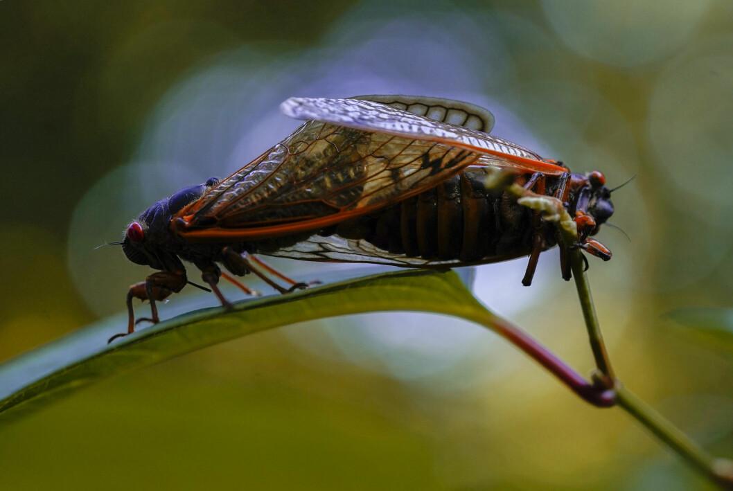 Tusenvis av disse insektene stanset pressekorpset som skal følge Joe Biden til Europa.