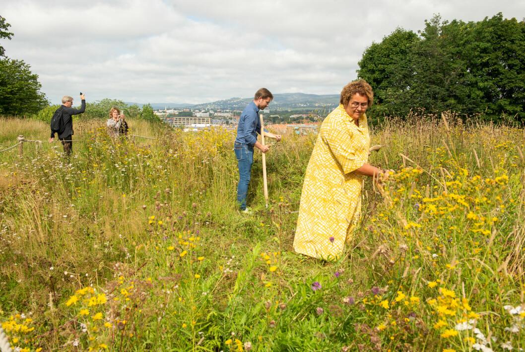 Klima- og miljøminister Sveinung Rotevatn (V) og landbruks- og matminister Olaug Bollestad (KrF) legger fram en tiltaksplan for å beskytte pollinerende ville insekter på Ola Narr i Oslo onsdag. Her slår de gress.