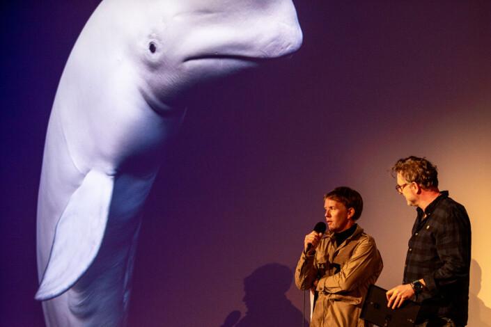 Aleksander Nordahl og Nils Anker har laget saken om hvalen Hvaldimir.